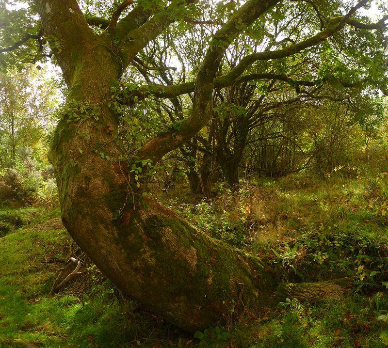 Tree Elder, lower Commons
