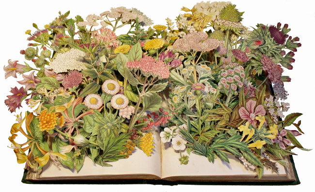 Flowering Plants of Great Britain by Kerry Miller