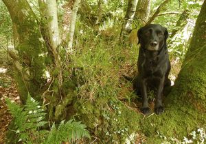Tilly in the woods