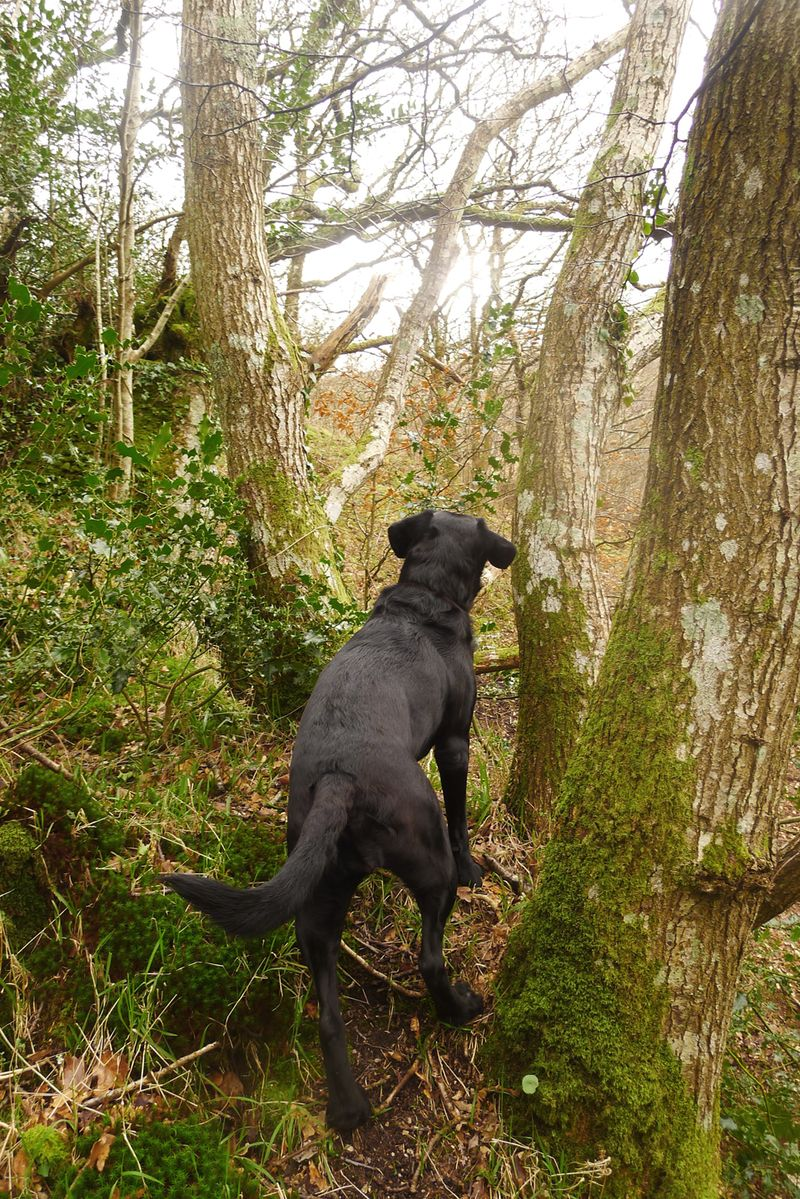 Tilly in the Trees