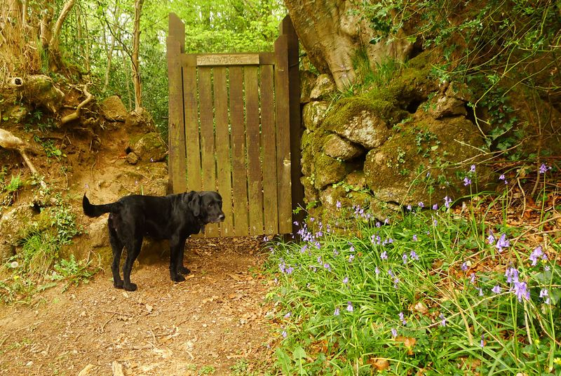 Bluebell gate
