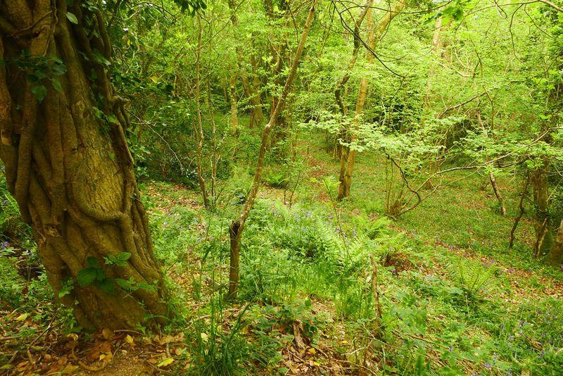 Nattadon woods