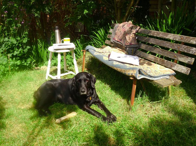 Sunbathing hound
