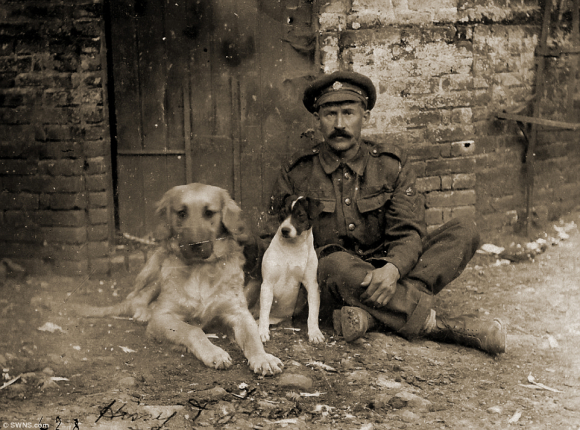 Hissy and Jack, the pet dogs of the Army Service Corp in France, 1916