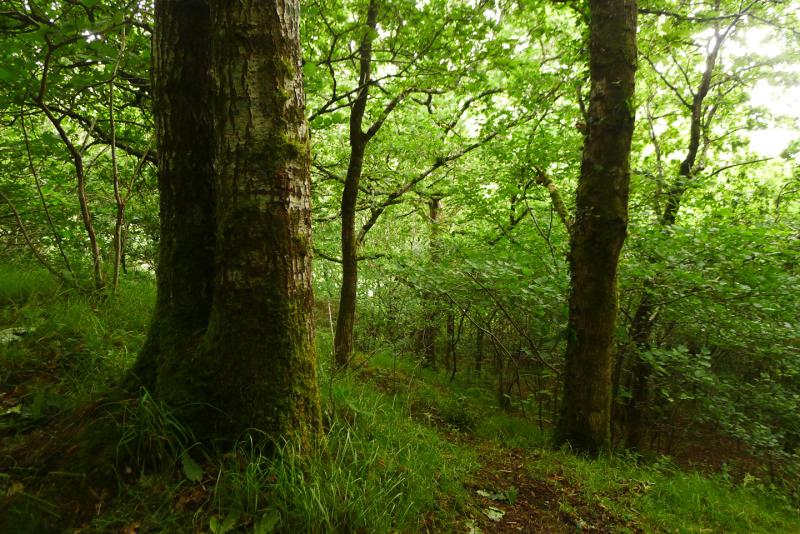 Woodland reverie 1