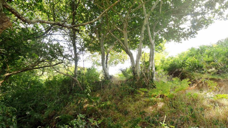 Rowan, oak, and birch