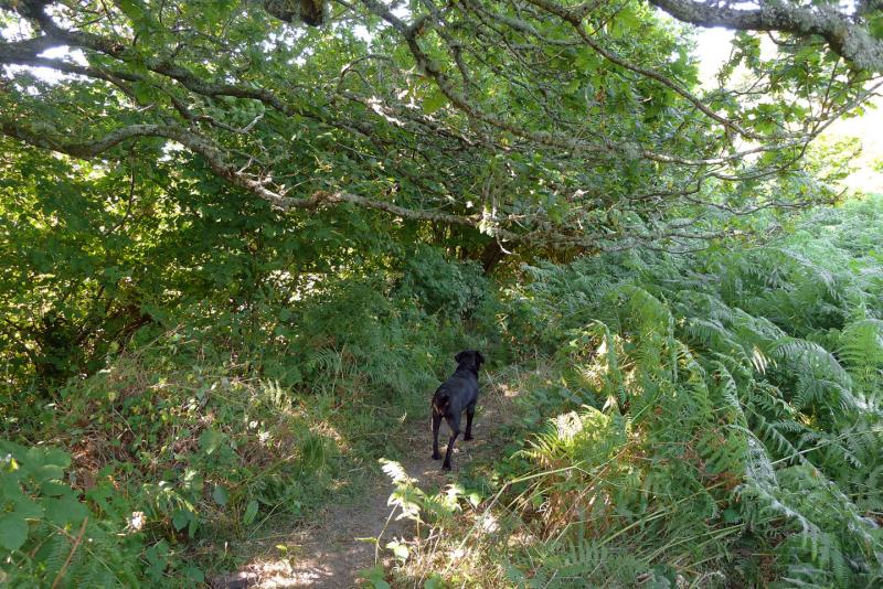 Homeward bound beneath oak, rowan, and ash