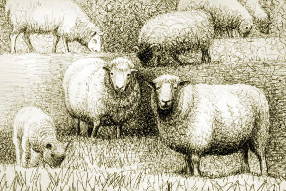 Sheep by Henry Moore