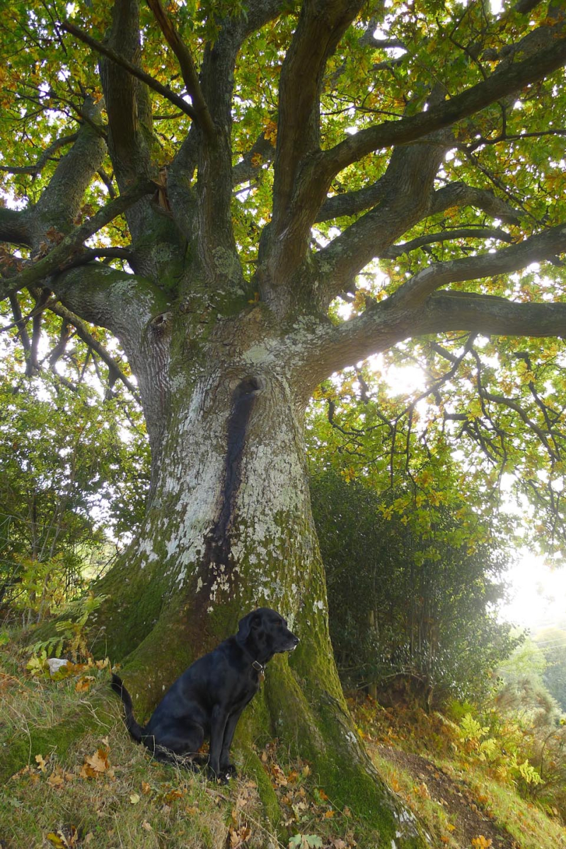 Tilly and the oak elder 1