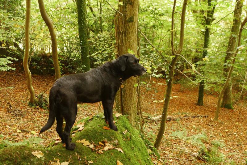 Nattadon Woods 7
