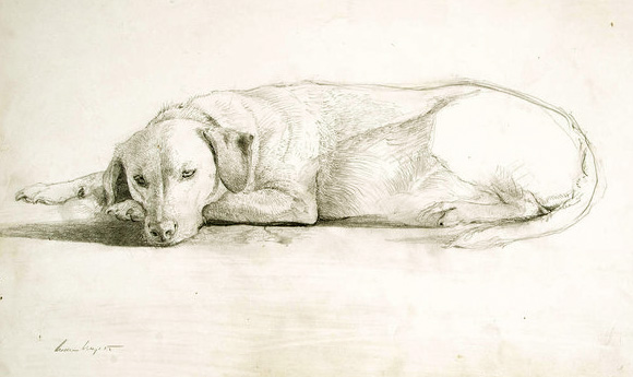 Andrew Wyeth dog sketch