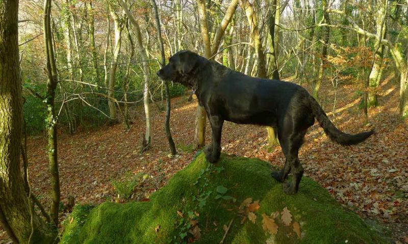 Rock hound 1