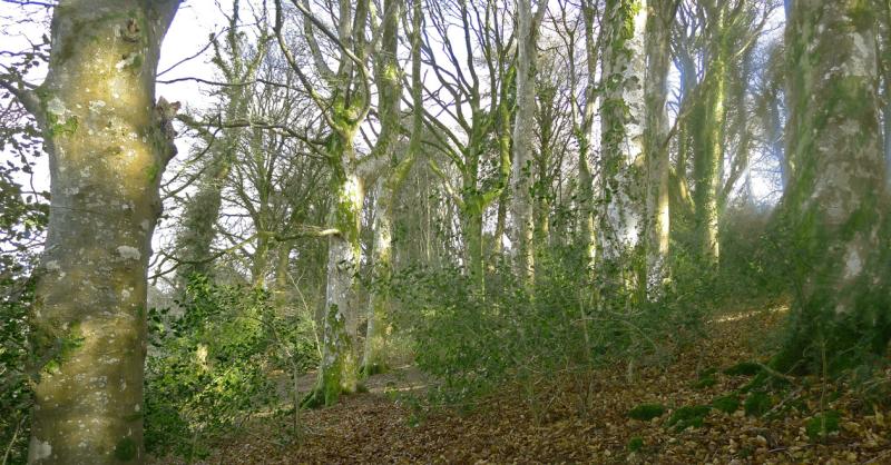 Beechwood 2