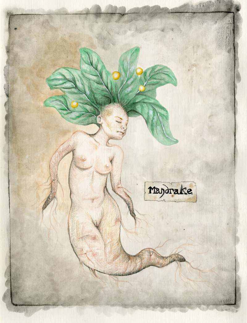Mandrake by Nomi McLeod