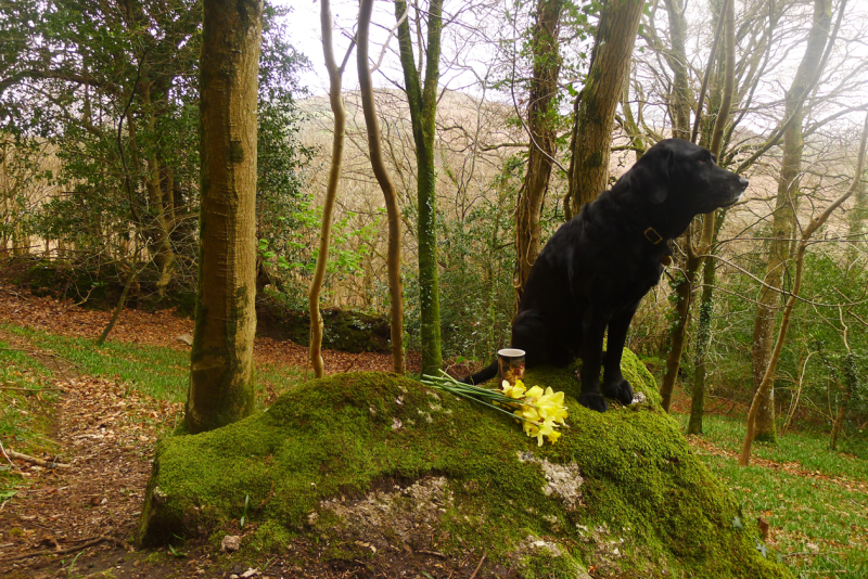 Coffee break with hound and daffodils