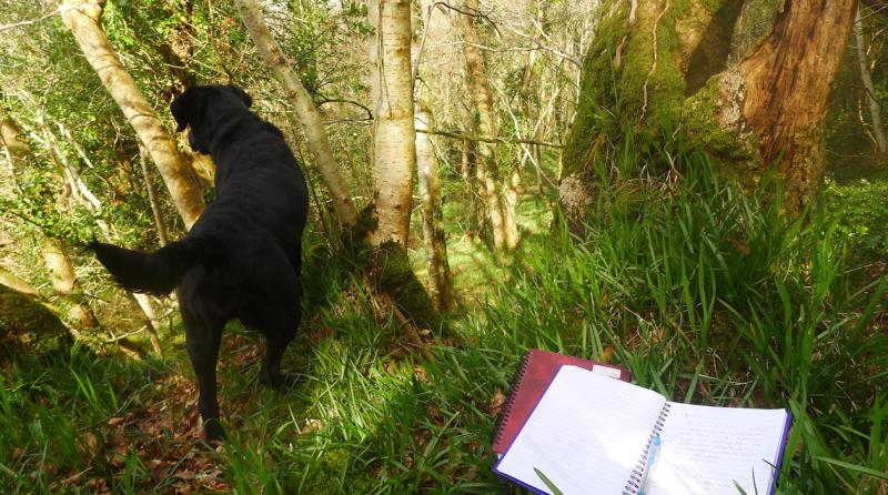 Hound and notebooks