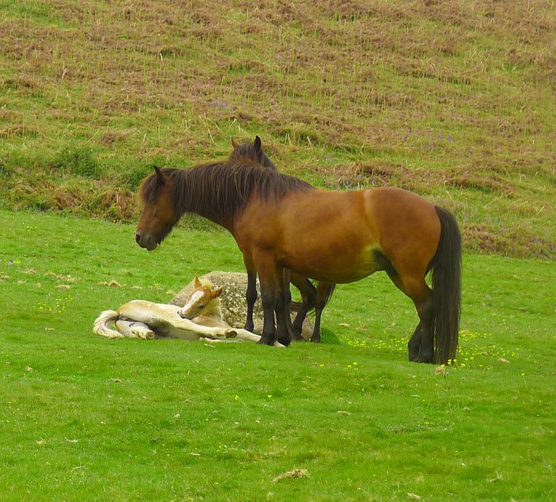 Ponies 7
