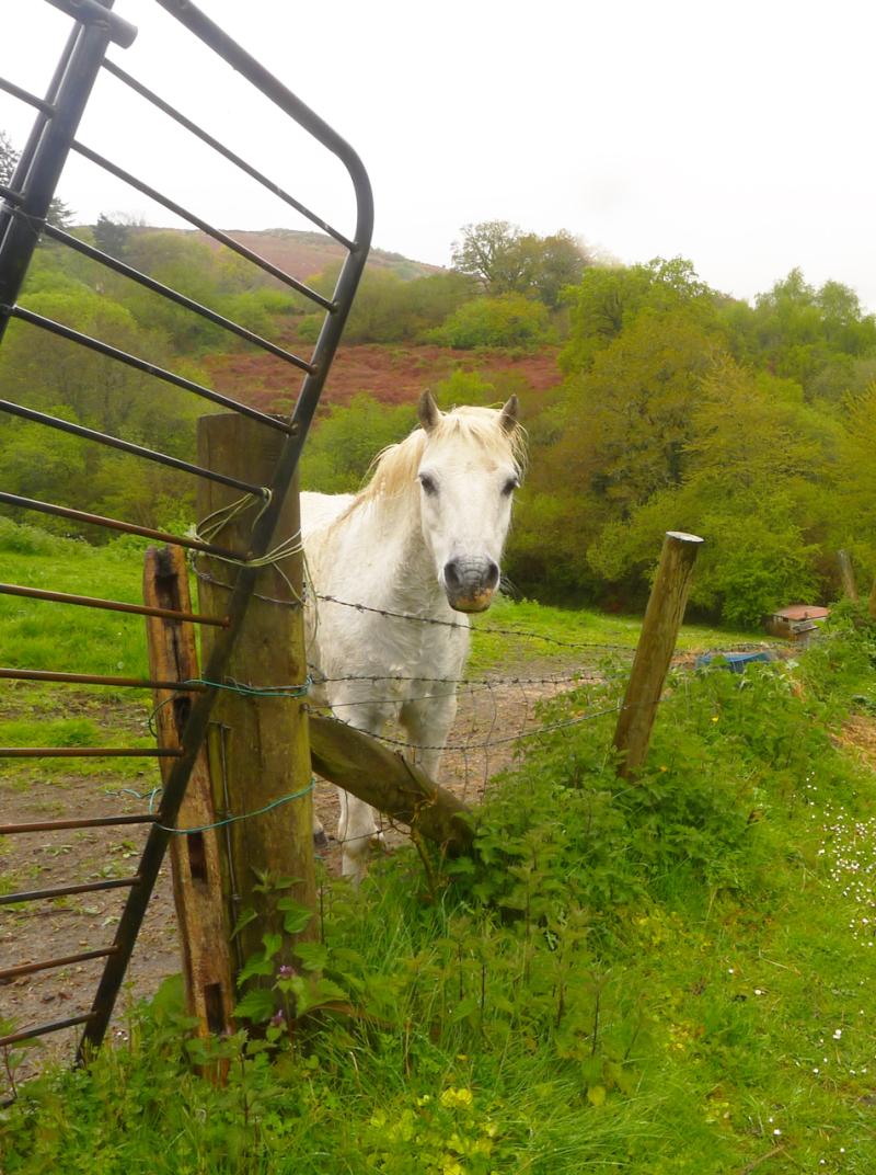 White horse 3