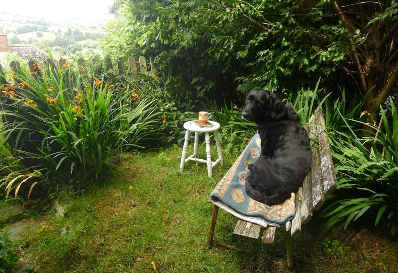 Tilly in the studio garden