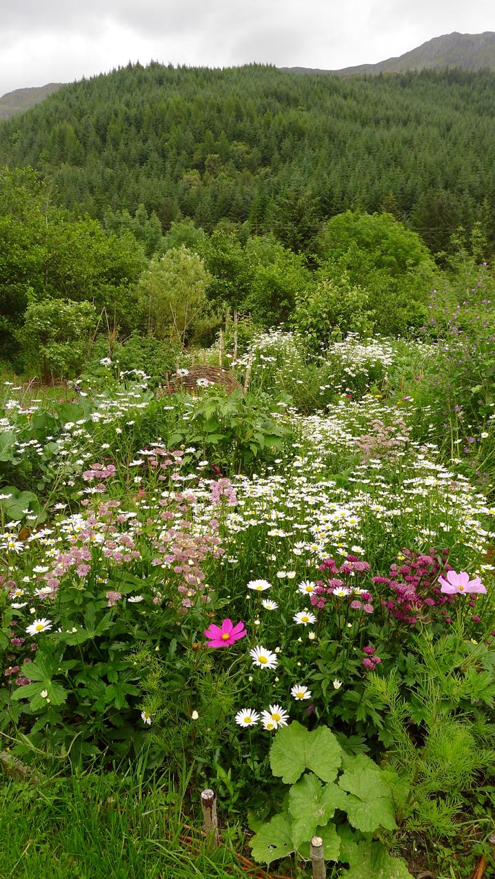 Flowers and hills  Corrary Farm