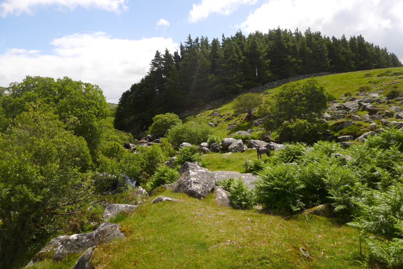 The Walla Brook, Dartmoor