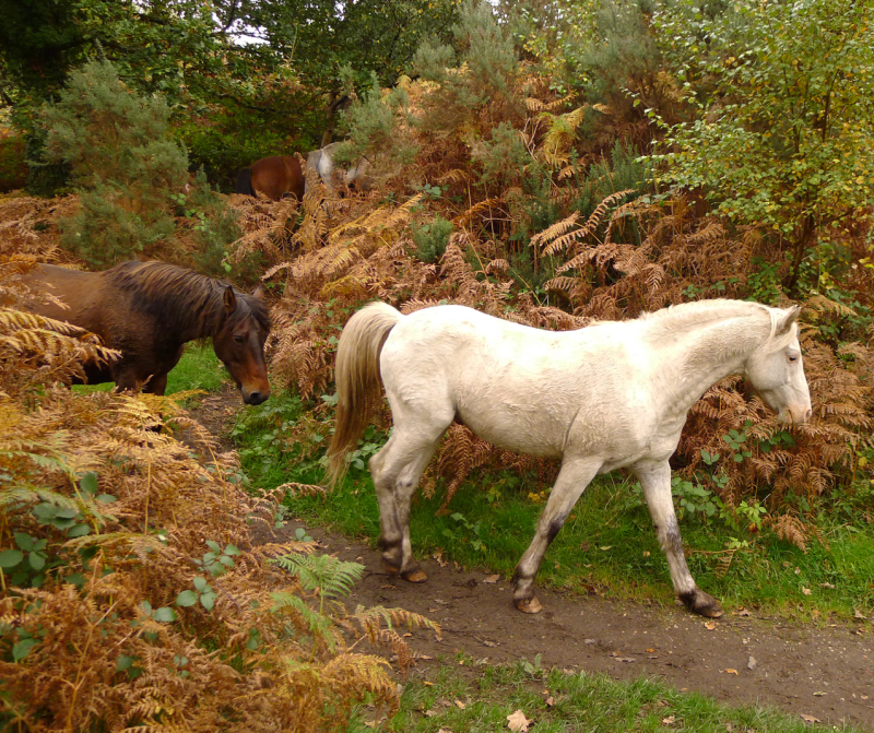 Ponies on the path 5