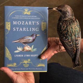 The book and the starling