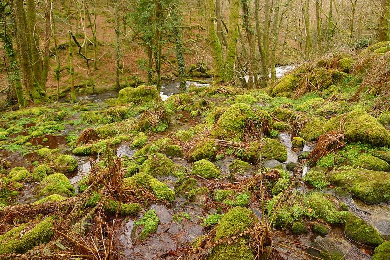 Plymbridge Woods 5