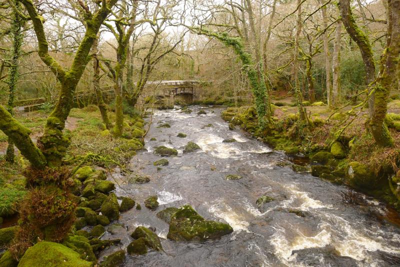 Plymbridge Woods 1