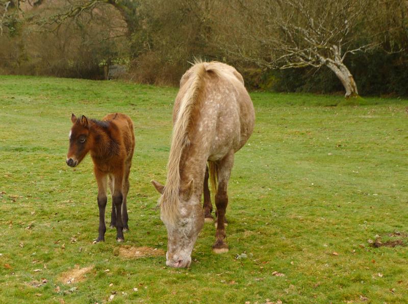 Dartmoor ponoes