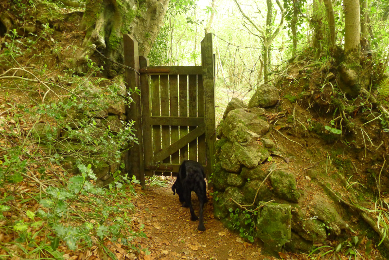 and through the old woodland gate.