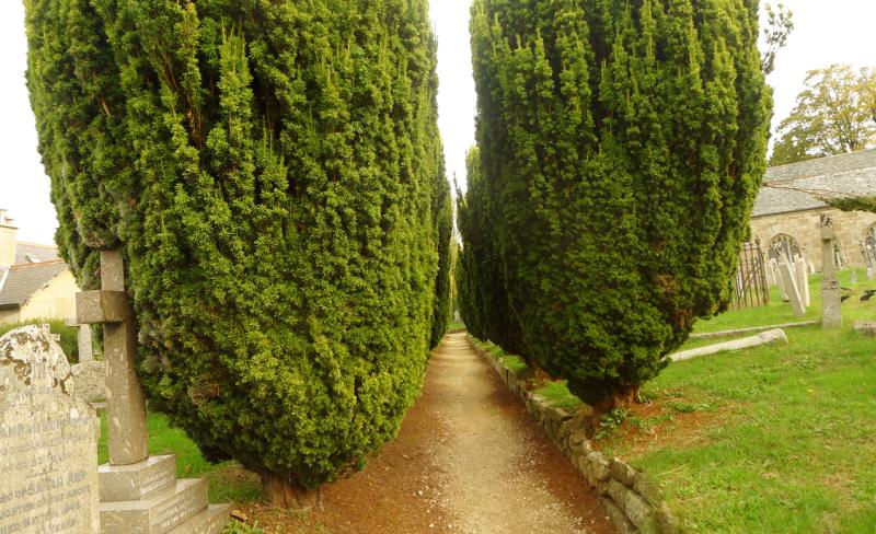 Chagford churchyard 7