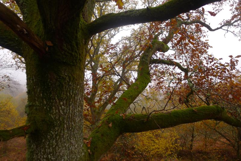 Meldon Hill 5