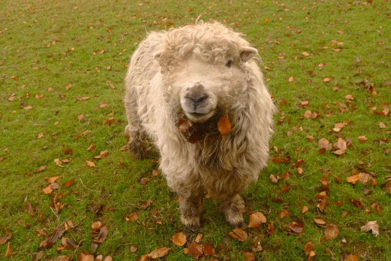 Sheep with leaf jewelry
