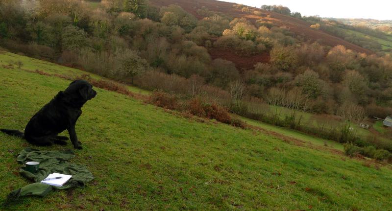 Hound on hill