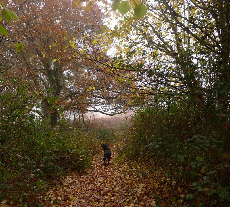 Meldon Hill 6