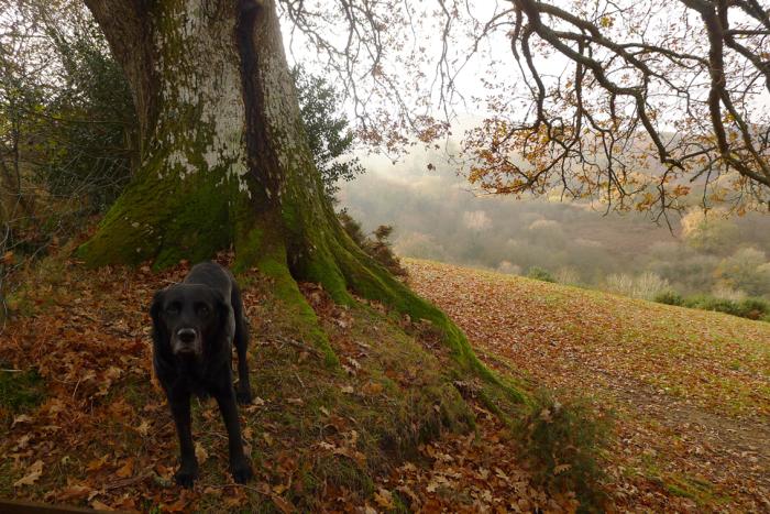 Morning under the oak