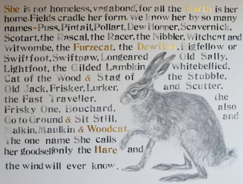 The Names of the Hare by Jackie Morris