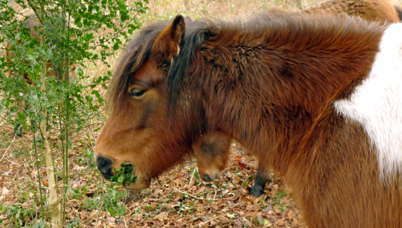 Ponies 11