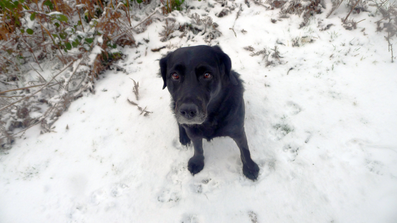Tilly in the snow