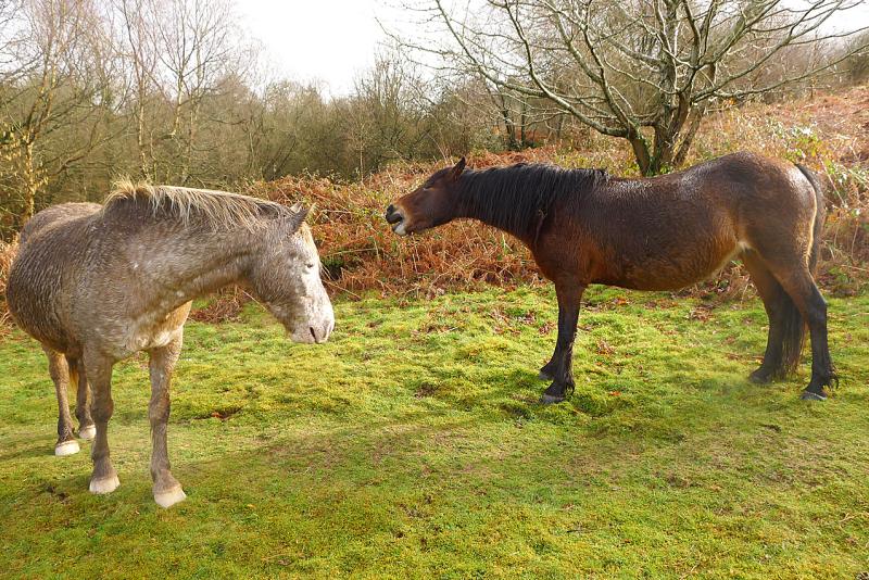 Ponies 4
