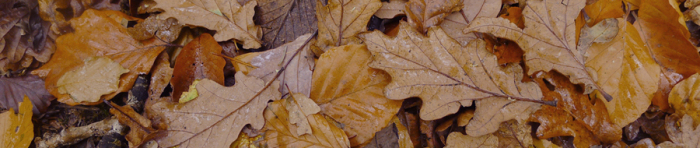 Leaves in the woods
