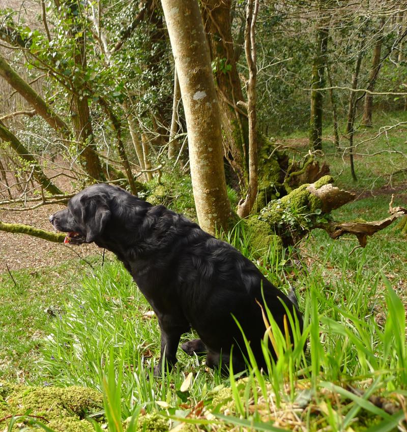 Woods edge 1