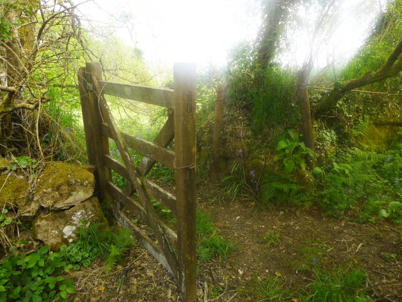 Through the meadow gate.