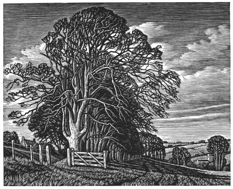 Knowle Hill, Broadchalke by Howard Phipps