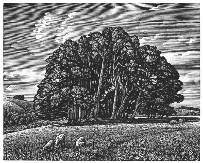 Win Green from Berwick Down by Howard Phipps