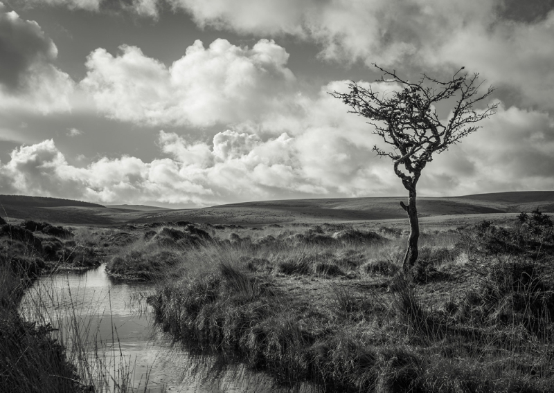 The Lone Tree bySimon Blackbourn