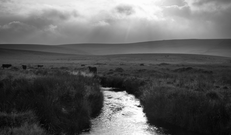 The North Teign River Flowing Over Dartmoor by Simon Blackbourn