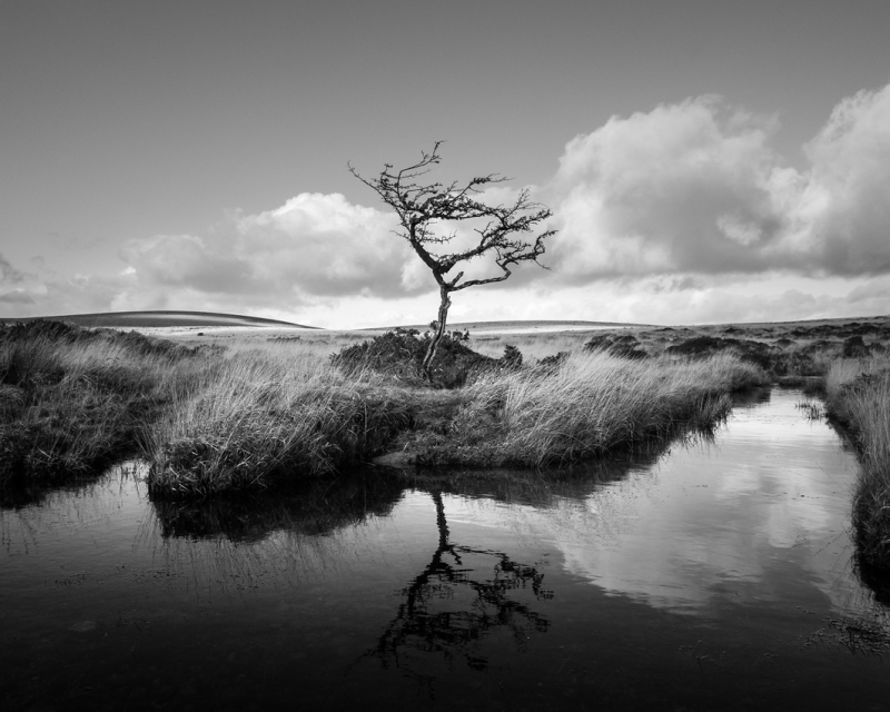Scorhill Tree by Simon Blackbourn