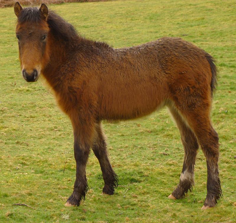 Ponies 9
